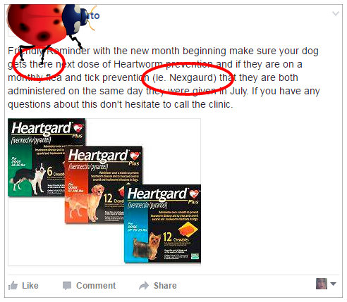 Importance of spell check with Veterinary Practice Blogs
